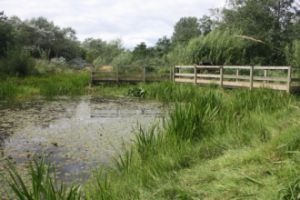 School Aycliffe Wetlands in mid summer