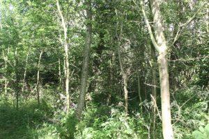 Newton Aycliffe Woodlands